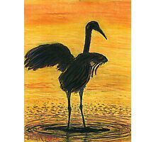 Crane Bathing In Gold Photographic Print
