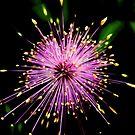 Pink Fireworks by venny