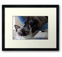 Bella and Murphy Framed Print