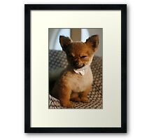 Pepe in a white bow Framed Print