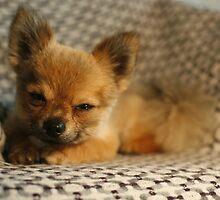 Pepe sleepy... by Pepe The Puppy
