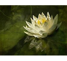 Lily's green world Photographic Print