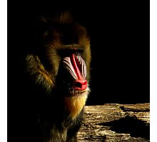 Primate Portraits ~ Part Two Photographic Print