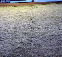 Footsteps in the Frost - Glounthaune, Co Cork, Ireland by EMESS