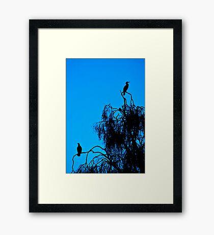 Cormorant Silhouettes Framed Print