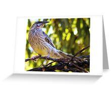 Wattle Bird in Tree Greeting Card