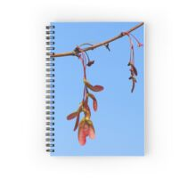 Sycamore Seeds in Spring Spiral Notebook