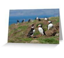Atlantic puffin community Greeting Card