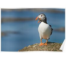 Squaking puffin Poster