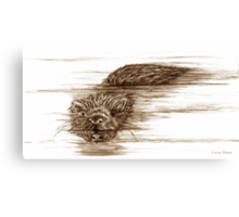 A Little Otter! Canvas Print