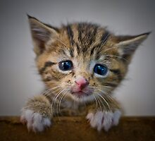 Sad Kitten by XLR8