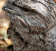 Tawny Frogmouth  by Evita