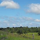 Cows and Pasture by Tracy Wazny