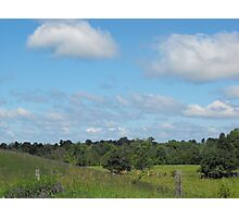 Cows and Pasture Photographic Print