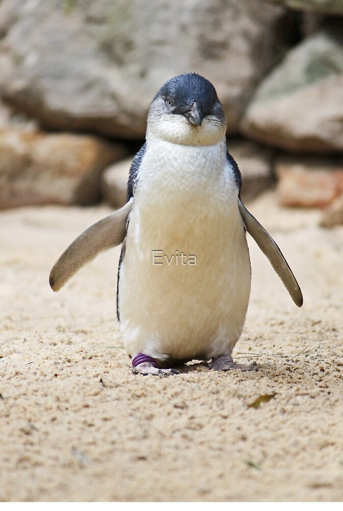 Happy Feet by Evita