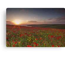 Cornish Poppy Field - Digital Art Canvas Print