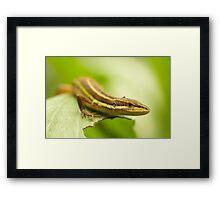 Chinese Green Striped Lizard Framed Print