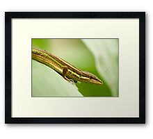 Chinese Green Striped Lizard Profile Framed Print