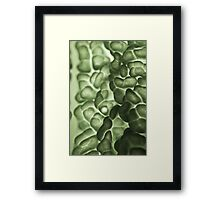Macro of a savoy cabbage Framed Print