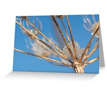 Reaching Out for the Sky ©  Greeting Card