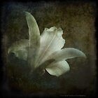 lily by Jacque Gates