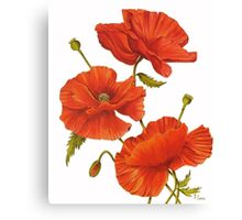Poppies on White Canvas Print