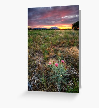 Bloom to Mountain Greeting Card