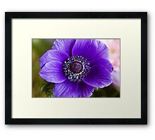 Purple Glory Framed Print