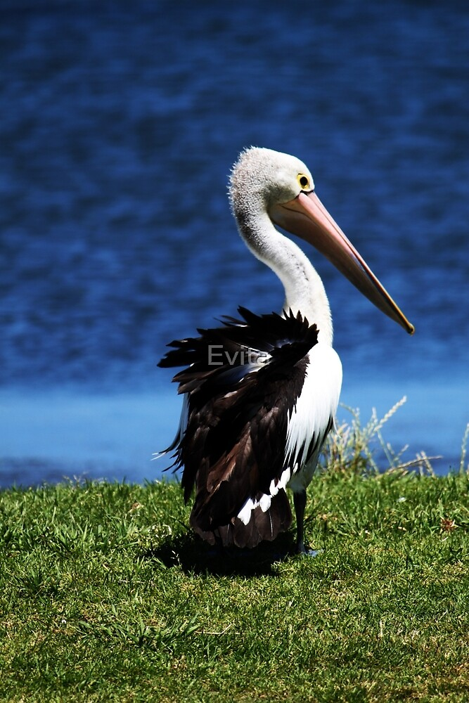 Don't Ruffle My Feathers by Evita