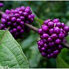 Wet berries by Ginger