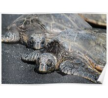 Green Sea Turtles in Hawaii Poster