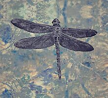 Dragonfly by Linda Lees