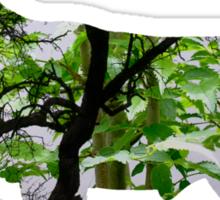Forest 2 Sticker