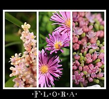 Flora by reflector