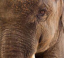 Indian Elephant by tara-leigh