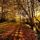 Woodland Walk by Eddie Howland