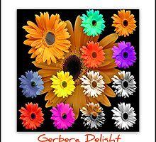 ~ Gerbera Delight ~ by Brenda Boisvert