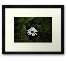 Grateful - collaboration with Photography by Paloma Framed Print