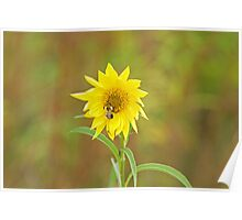 Bee on Sunflower Poster