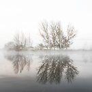 Morning  Fog Canberra by Kym Bradley
