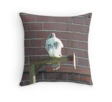 Red tailed hawk October 2009 Throw Pillow