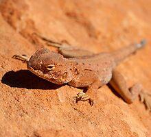 Desert Lizard by tara-leigh