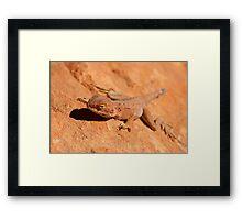 Desert Lizard Framed Print