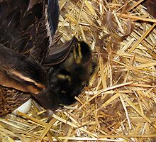 Welcome to the world! by Sherry Pundt