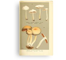 Illustrations of British Fungi by Mordecai Cubitt Cook 1891 V4 0543 AGARICUS  HYPHOLOMA  HYDROPHILUS Canvas Print