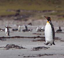 King Penguin by tara-leigh