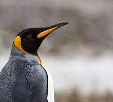 King Penguin Profile by tara-leigh