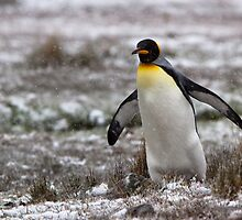 Penguin Waddle by tara-leigh