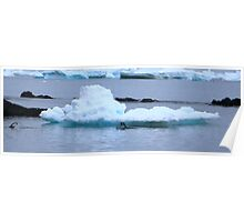 Adelie Penguins in Antarctica, 8 Poster
