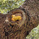 Tree Mushroom by Sandra Moore